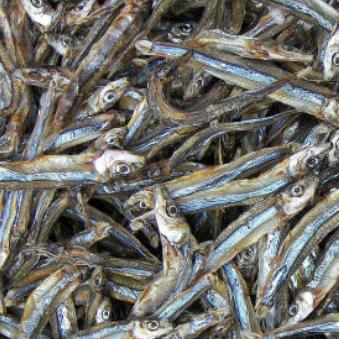 Cá cơm khô loại chuẩn xuất khẩu