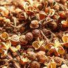 3 loại hạt gia vị đặc sản Tây Bắc nổi tiếng
