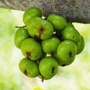 Top trái cây tốt cho nam giới