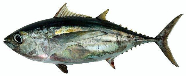 Hàm lượng thủy ngân trong cá
